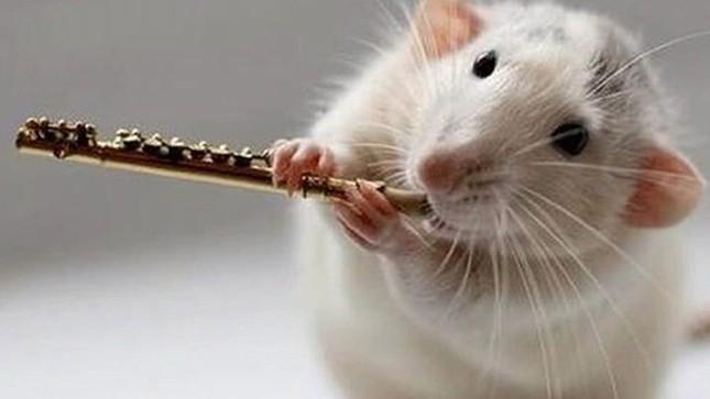 Những điều thú vị về chú chuột – loài vật đại diện của năm Canh Tý 2020 ảnh 1
