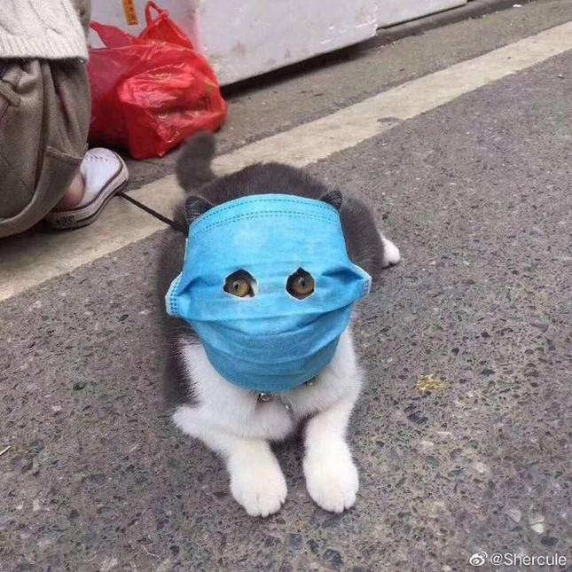 Ảnh chú mèo đeo khẩu trang giữa dịch virus corona gây bão mạng ảnh 2