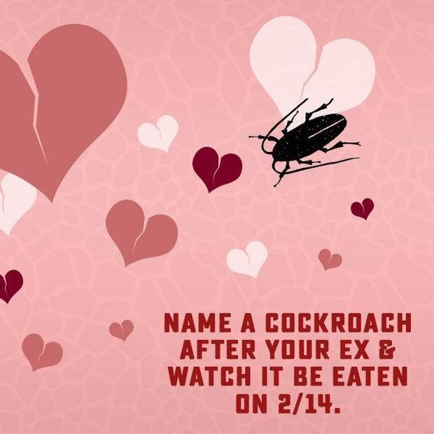 Đặt tên người yêu cũ cho gián, hoa thịt bò và dịch vụ lạ dịp Valentine ảnh 7