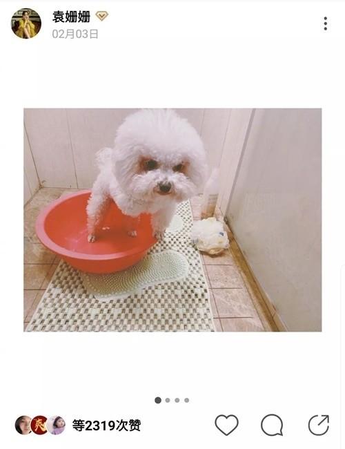 Viên San San kêu trời vì phải tự tay làm đẹp cho cún cưng, combo cắt gội sấy lông cho cún đều do cô tự đảm nhận hết.