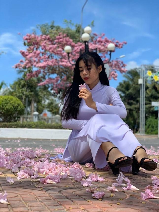 Kèn hồng ở Sóc Trăng nở rộ, đẹp xao xuyến tựa như phim Hàn Quốc ảnh 14