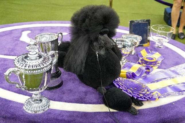 Hàng nghìn thú cưng tham dự cuộc thi chó thuần chủng thế giới ảnh 1