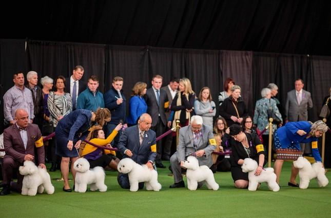 Hàng nghìn thú cưng tham dự cuộc thi chó thuần chủng thế giới ảnh 3