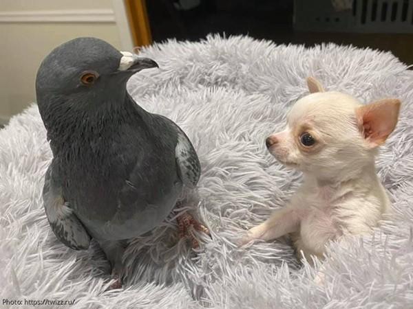 Hai con vật khuyết tật dường như tìm được sự đồng cảm và chúng luôn tỏ ra vui vẻ khi ở bên cạnh nhau.