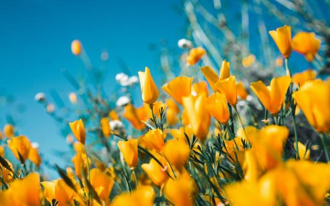 Sa mạc cũng có lúc được phủ đầy hoa, những điều tốt đẹp vẫn sẽ đến với bạn ảnh 1