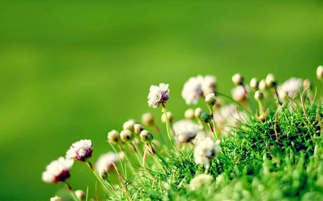 Sa mạc cũng có lúc được phủ đầy hoa, những điều tốt đẹp vẫn sẽ đến với bạn ảnh 3
