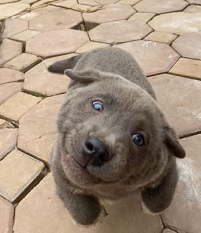 """Chú chó bất ngờ trở thành hiện tượng mạng: Chân ngắn, mặt lại thái độ nhưng ai cũng gọi là """"idol"""" ảnh 4"""