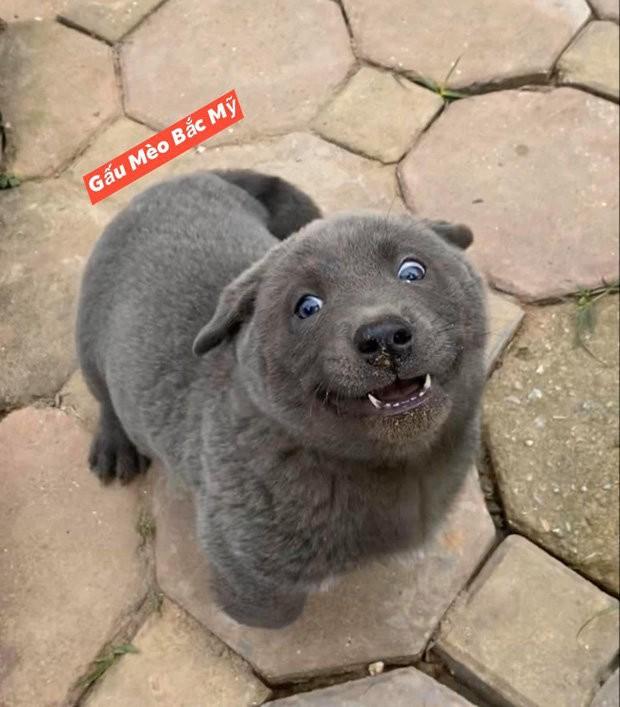 """Chú chó bất ngờ trở thành hiện tượng mạng: Chân ngắn, mặt lại thái độ nhưng ai cũng gọi là """"idol"""" ảnh 12"""