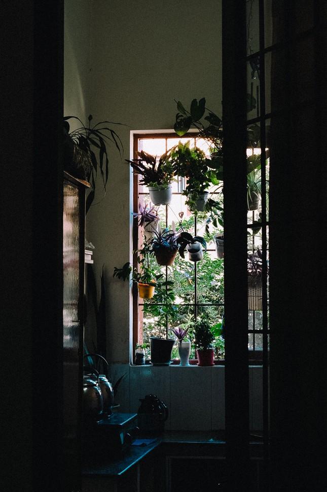 Ngất xỉu với khung cảnh đẹp như một giấc mộng đêm Hè của trường THPT Chuyên Thăng Long - Đà Lạt ảnh 9