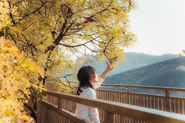 """Xác định tọa độ """"con đường ngôn tình"""" đẹp mộng mơ, được ví như """"Little Korea"""" ở Đà Lạt ảnh 7"""