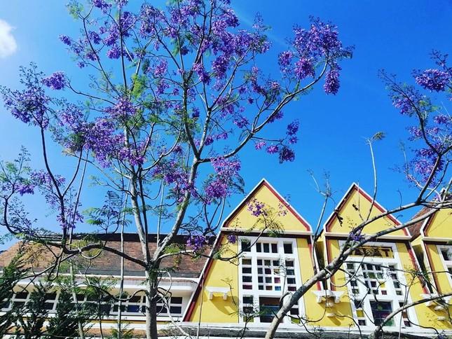 Còn chờ gì nữa mà chưa check-in Đà Lạt ngắm hoa phượng tím đẹp mơ màng ảnh 7