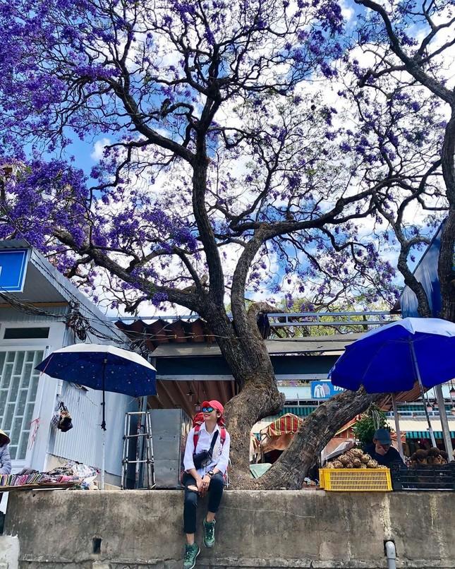 Còn chờ gì nữa mà chưa check-in Đà Lạt ngắm hoa phượng tím đẹp mơ màng ảnh 9