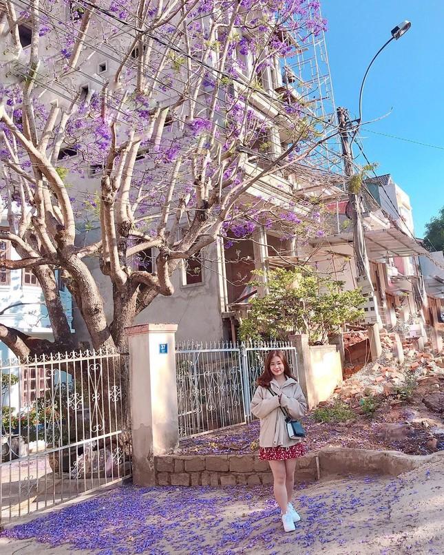Còn chờ gì nữa mà chưa check-in Đà Lạt ngắm hoa phượng tím đẹp mơ màng ảnh 15