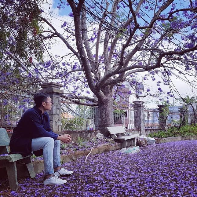 Còn chờ gì nữa mà chưa check-in Đà Lạt ngắm hoa phượng tím đẹp mơ màng ảnh 18