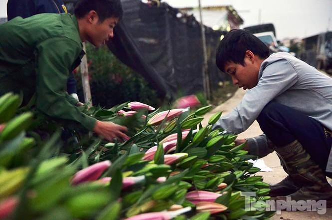 Người dân Tây Tựu 'khóc ròng' vì hoa ly nở trước Tết - ảnh 12