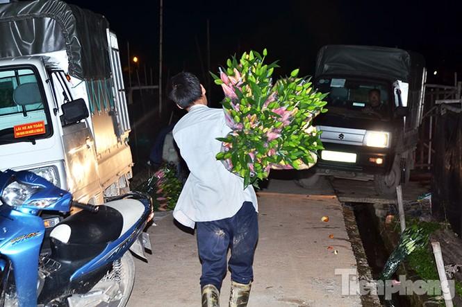 Người dân Tây Tựu 'khóc ròng' vì hoa ly nở trước Tết - ảnh 14