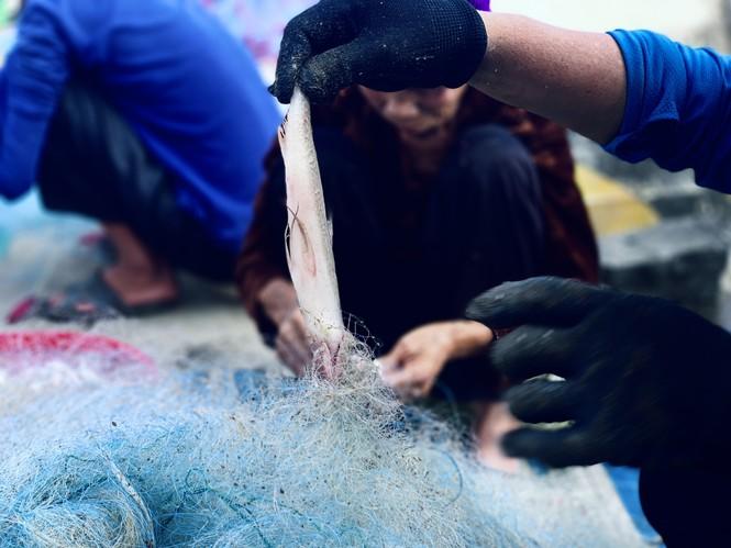 Được mùa cá cháo, ngư dân Hà Tĩnh thu tiền triệu mỗi chuyến ra khơi - ảnh 10