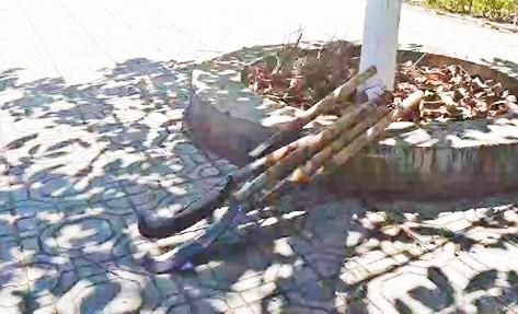 Bất ngờ kết quả điều tra vụ 2 phóng viên bị hành hung ở Lâm Đồng - ảnh 2