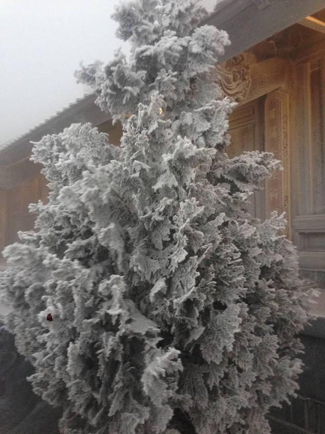 Băng tuyết bao phủ trên đỉnh Fansipan - ảnh 10