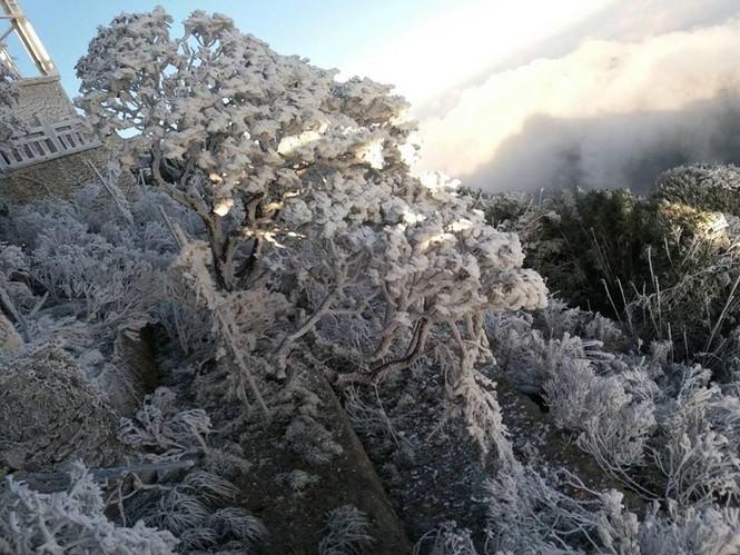 Băng tuyết bao phủ trên đỉnh Fansipan - ảnh 2
