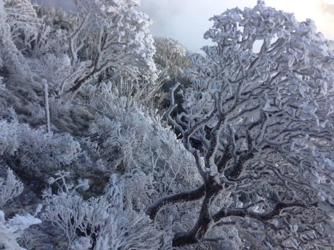 Băng tuyết bao phủ trên đỉnh Fansipan - ảnh 4