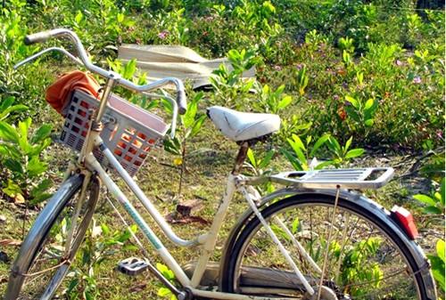 Thi thể Bửu và chiếc xe đạp của em ở hiện trường