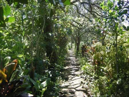 Một góc vườn ngải tại Bình Thủy của Tư Đức