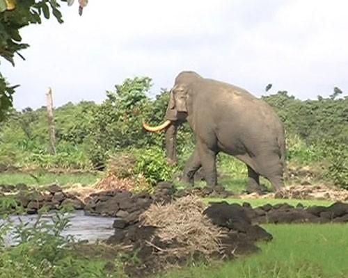 Con voi quay trở vào rừng. Ảnh: Thanh niên