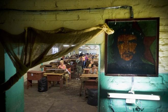Quy trình sản xuất xì gà cầu kỳ ở Cuba - ảnh 11