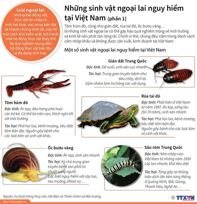 Những sinh vật ngoại lai vô cùng nguy hiểm tại Việt Nam - ảnh 1