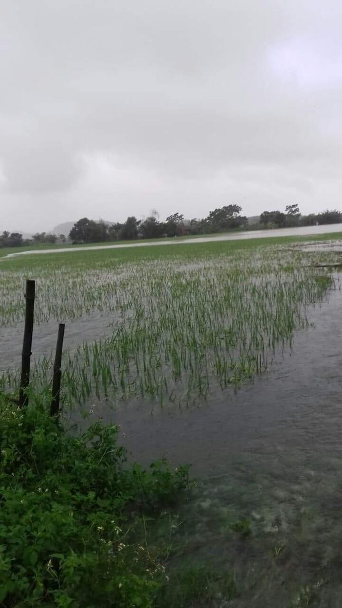 Thanh Hóa nhiều nơi lại ngập lụt, thiệt hại do mưa bão số 4 - ảnh 5