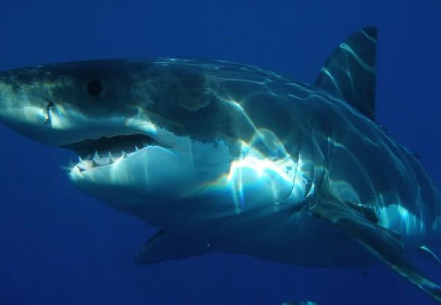 Top 9 loài động vật săn mồi đáng sợ nhất thế giới tự nhiên - ảnh 2