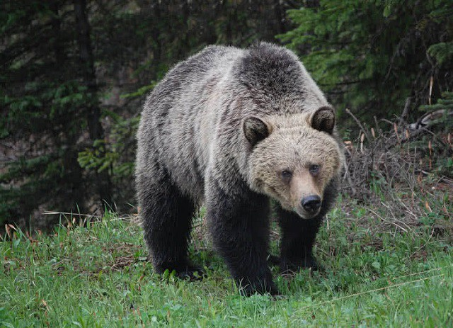 Top 10 loài động vật khỏe nhất hành tinh - ảnh 3