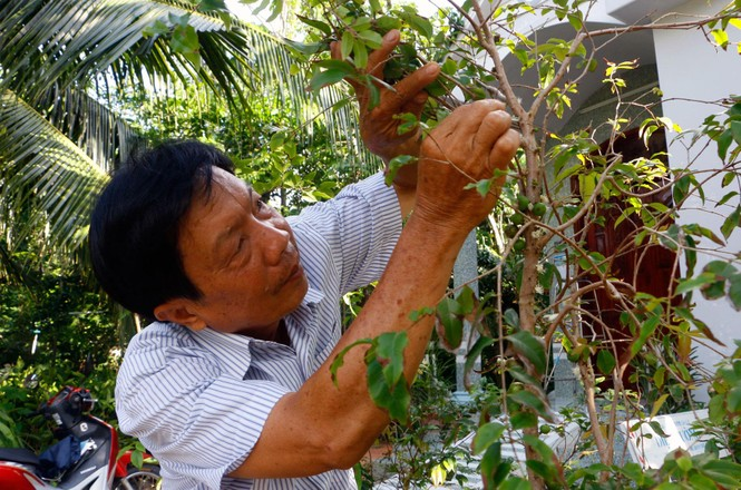 Chiêm ngưỡng vườn nho thân gỗ của thầy giáo xứ Cù Lao - ảnh 6