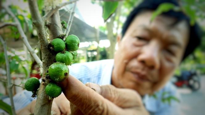 Chiêm ngưỡng vườn nho thân gỗ của thầy giáo xứ Cù Lao - ảnh 5