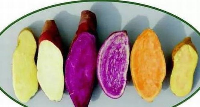 Không cần thuốc bổ, ăn khoai lang vừa tốt vừa chữa được nhiều bệnh nguy hiểm - ảnh 2