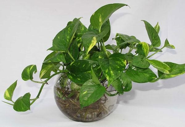 Những loại cây để trong nhà vừa tốt cho sức khỏe vừa nhiều tài lộc - ảnh 3