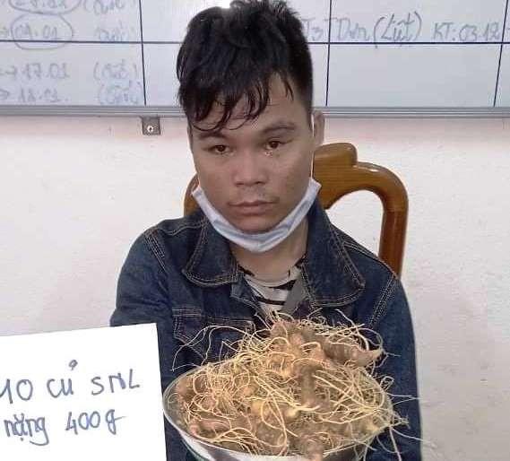 Bị công an bắt trộm 10 củ sâm trong vườn sâm của bố - ảnh 1