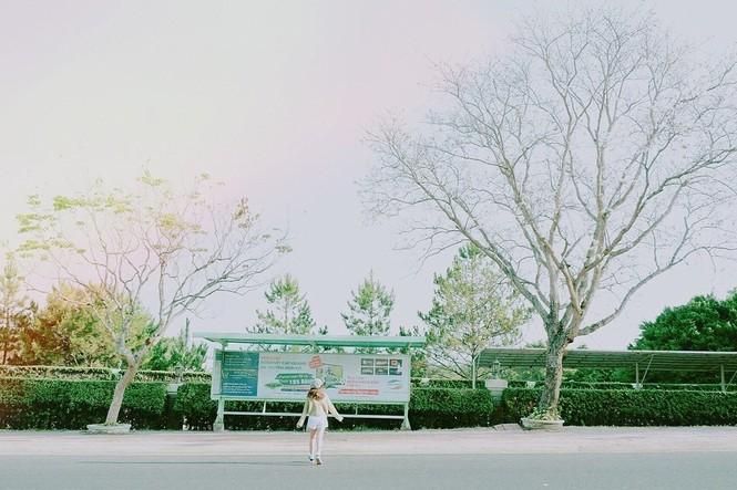 Những con đường ngập tràn hoa ban ở Đà Lạt tháng 12 này: Mình gặp nhau khi mùa hoa nở nhé! - ảnh 6