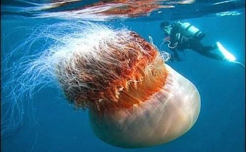 Những động vật khổng lồ 'khó tin' trên trái đất - ảnh 2