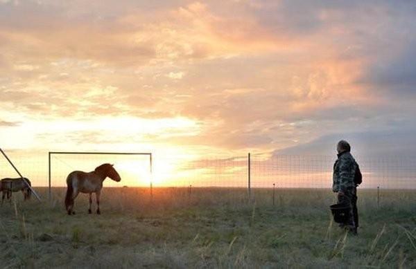Putin chăm sóc ngựa hoang quý hiếm - ảnh 4