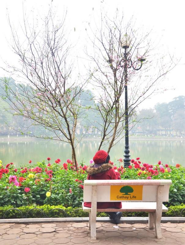 [ẢNH] 'Vườn' đào rừng trăm gốc khoe sắc cạnh Tháp Rùa - ảnh 9