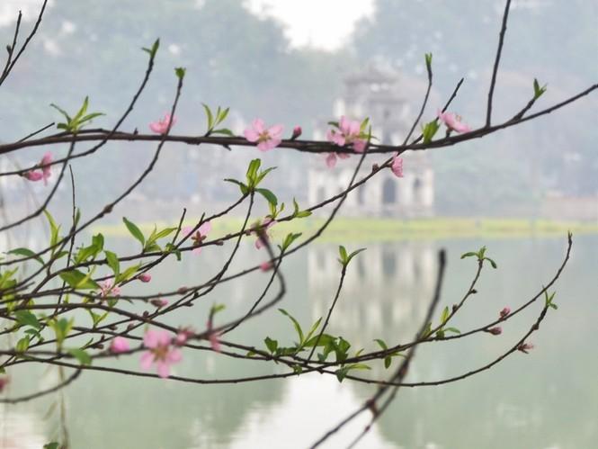 [ẢNH] 'Vườn' đào rừng trăm gốc khoe sắc cạnh Tháp Rùa - ảnh 11