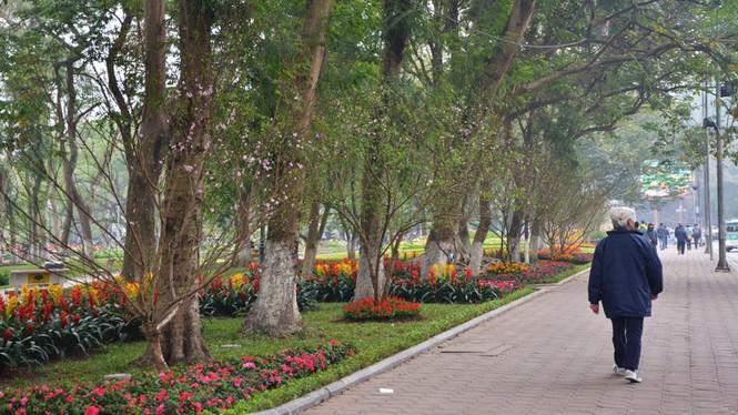[ẢNH] 'Vườn' đào rừng trăm gốc khoe sắc cạnh Tháp Rùa - ảnh 5