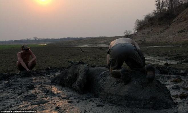 Ảnh vô cùng xúc động giải cứu voi sa lầy - ảnh 4