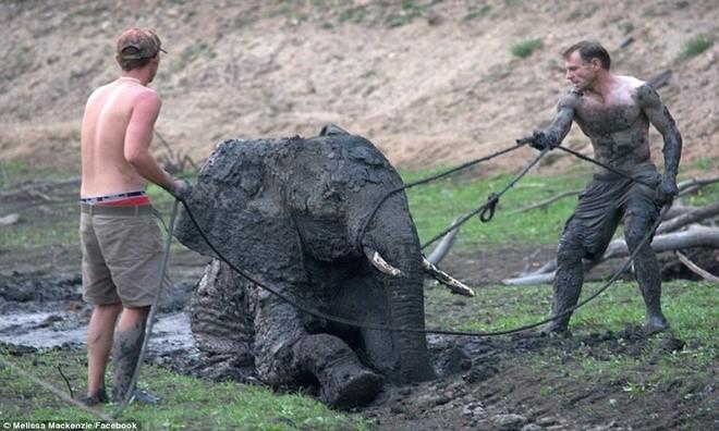 Ảnh vô cùng xúc động giải cứu voi sa lầy - ảnh 7