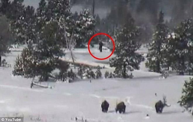 Phát hiện Người Tuyết Chân to bí ẩn tại Công viên Quốc gia Mỹ? - ảnh 1