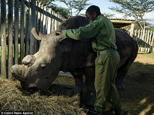 Bảo vệ Sudan là hoạt động rất tốn kém. Mỗi tháng chính phủ Kenya phải chi 75.000 bảng để trả lương cho 40 binh sĩ và mua thức ăn cho con vật.