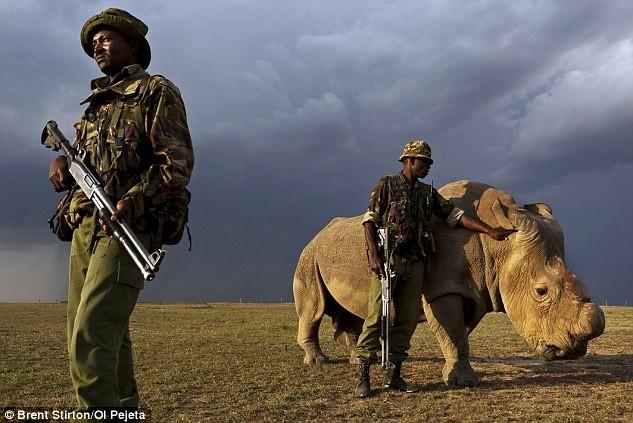 Những binh sĩ bảo vệ Sudan cũng hiểu rằng