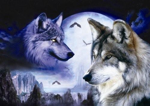 1001 thắc mắc: Tại sao chó sói - sát thủ rừng xanh hay hú vào ban đêm? - ảnh 1